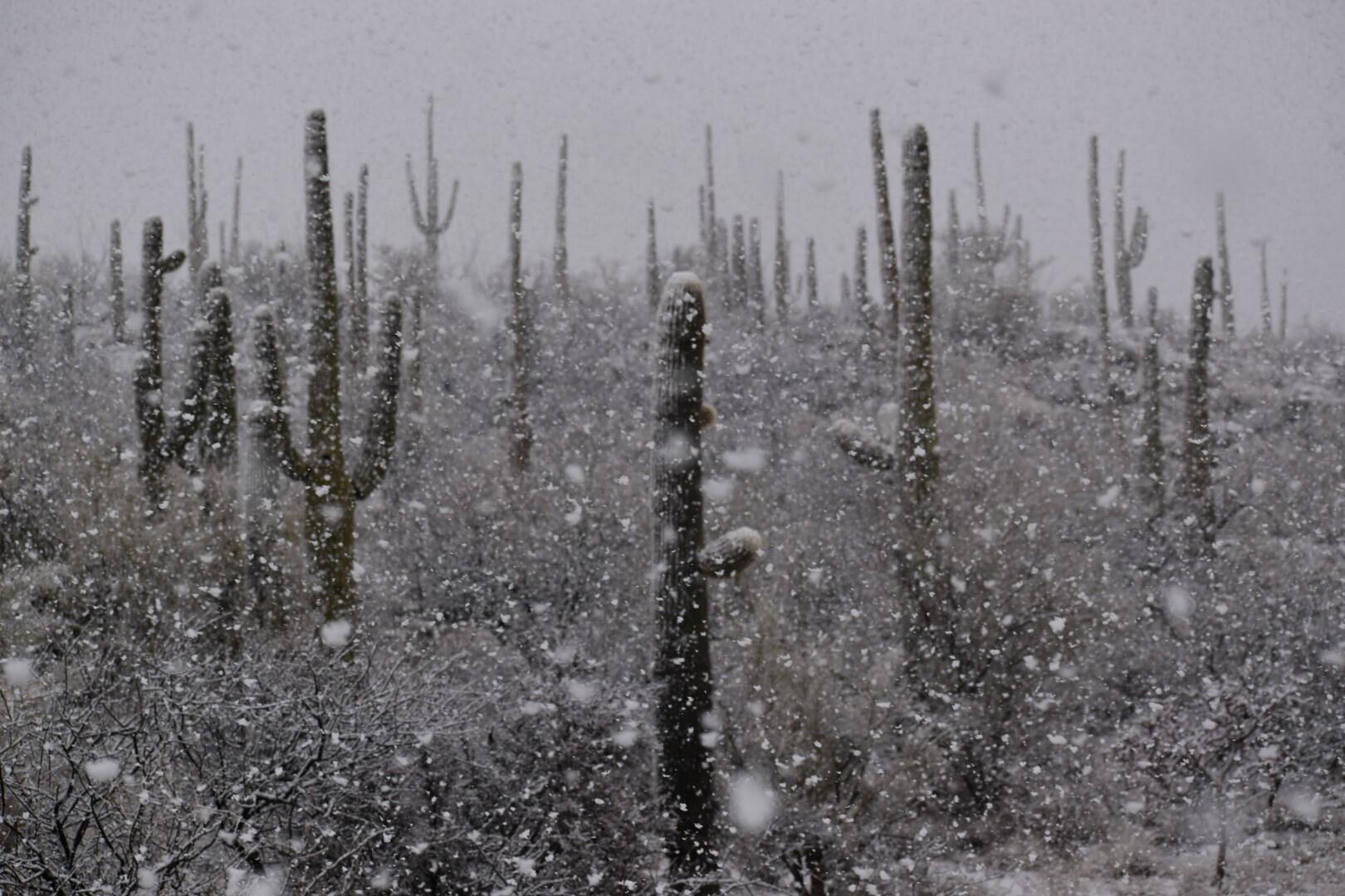 Agua Caliente Trailhead Snow