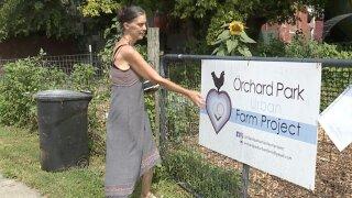 Orchard Park farm project.jpg
