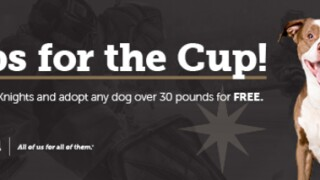 Free dog adoptions as part of Pups for a Cup df16571da