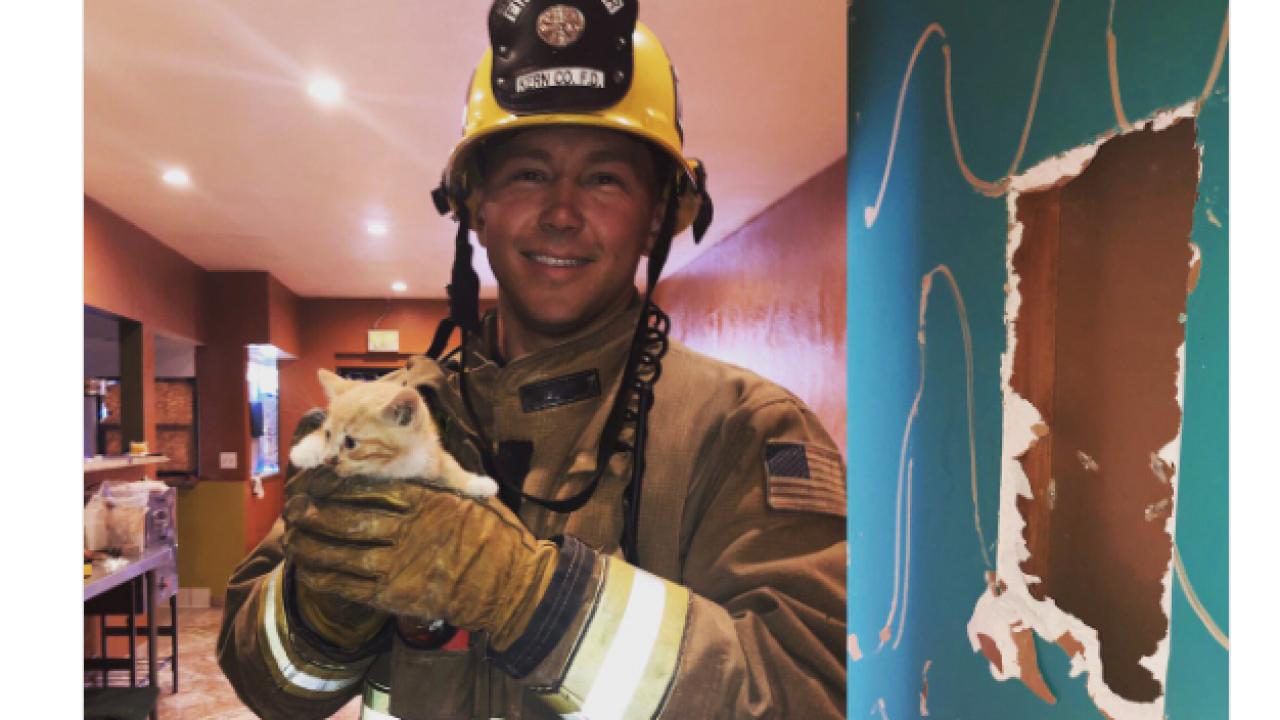 kern county fire kitten