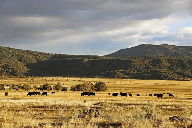 GALLERY: Raise horses, cattle at this $23M ranch near Montrose