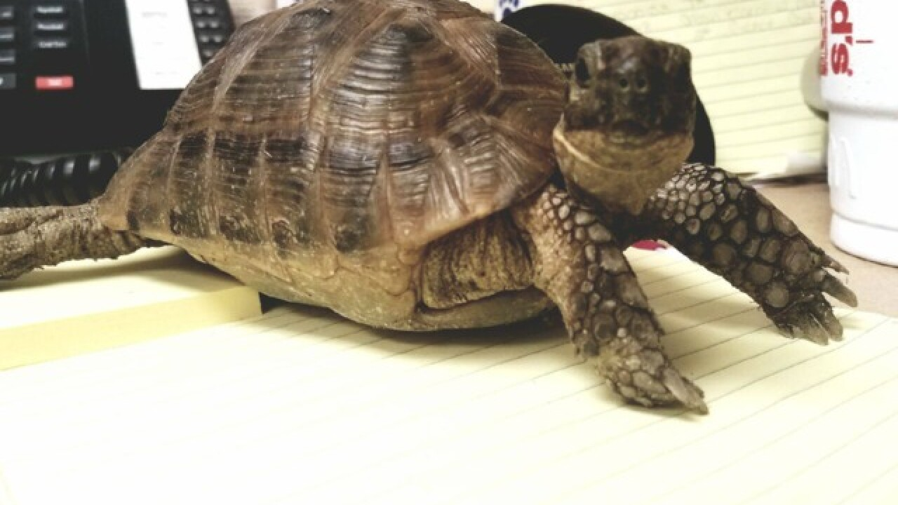 HAWS: Lost tortoise found in Hartland