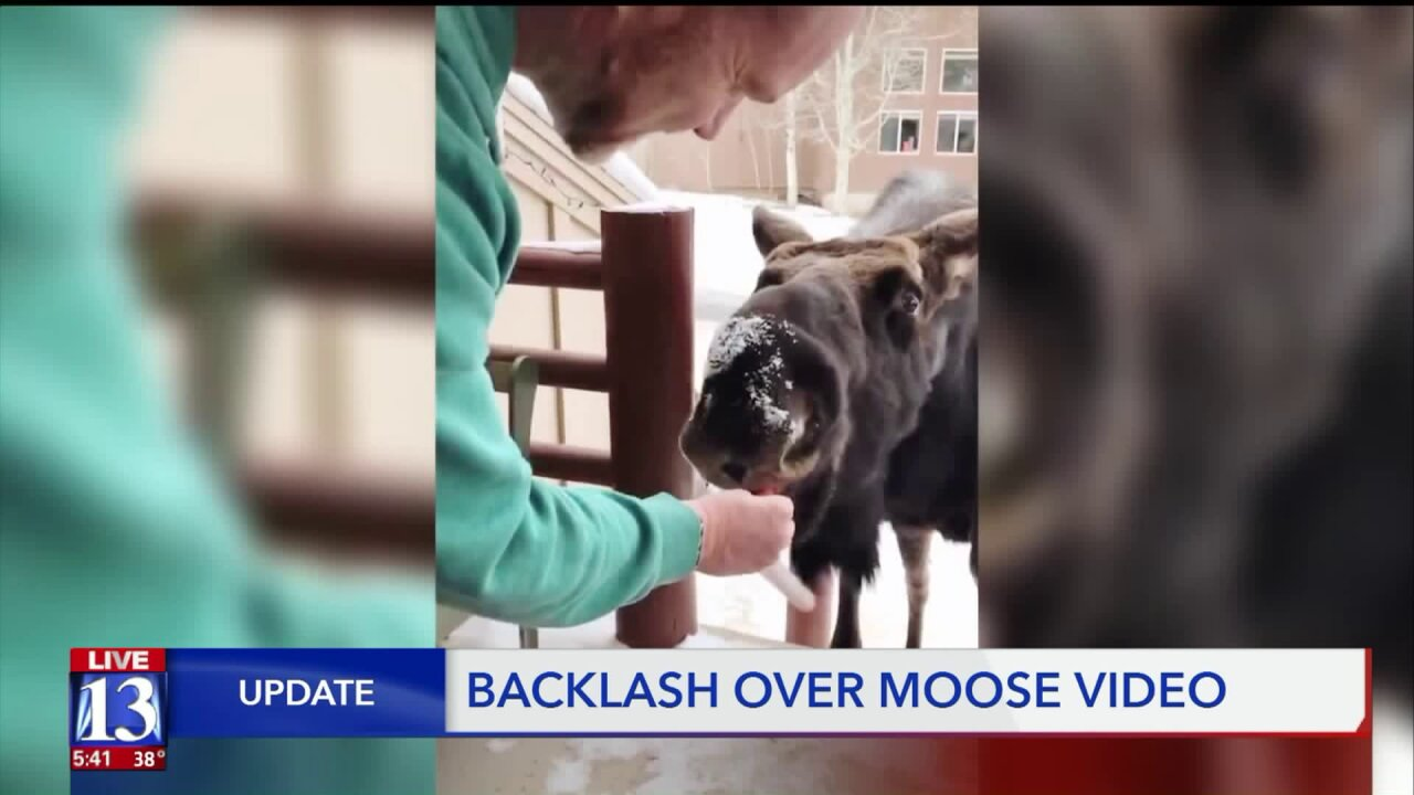 Family receives backlash after posting video of them feeding a moose