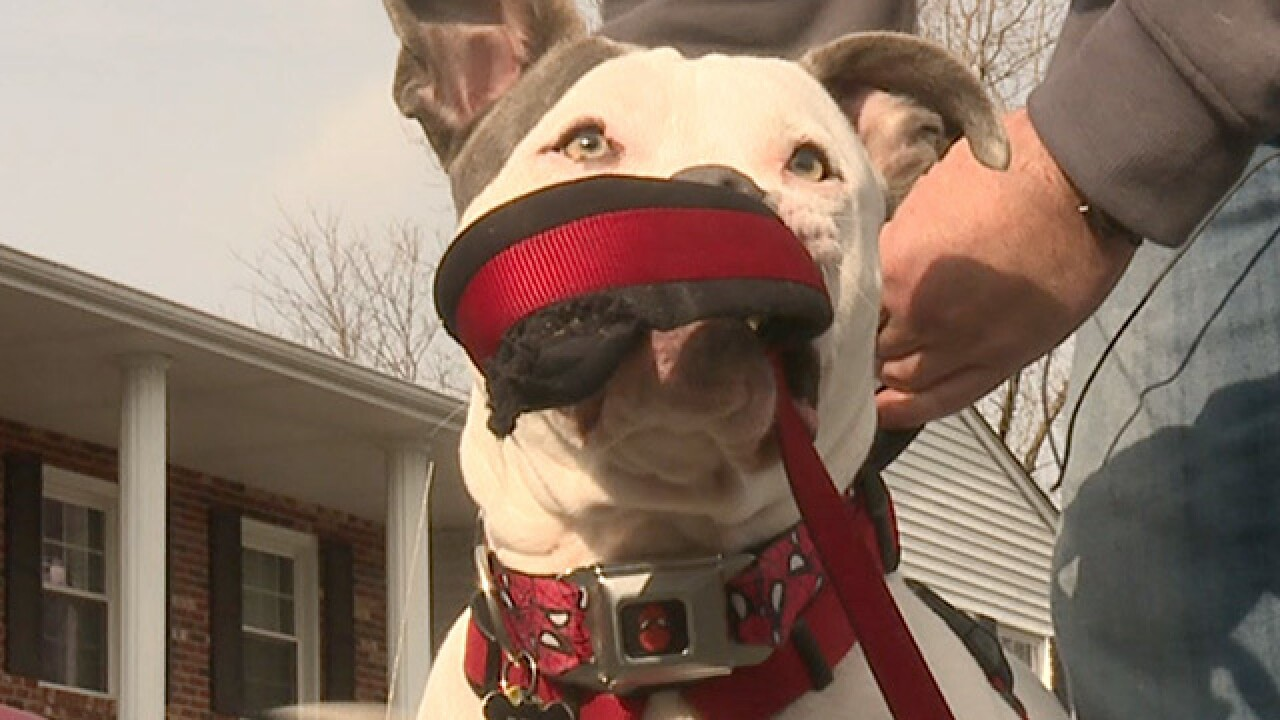 Owner of dog kicked at dog daycare speaks out