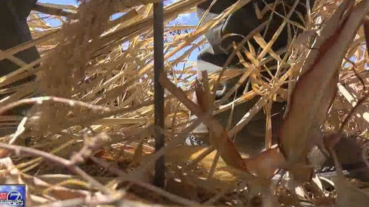 Farmers in Southeastern CO battle drought, winds