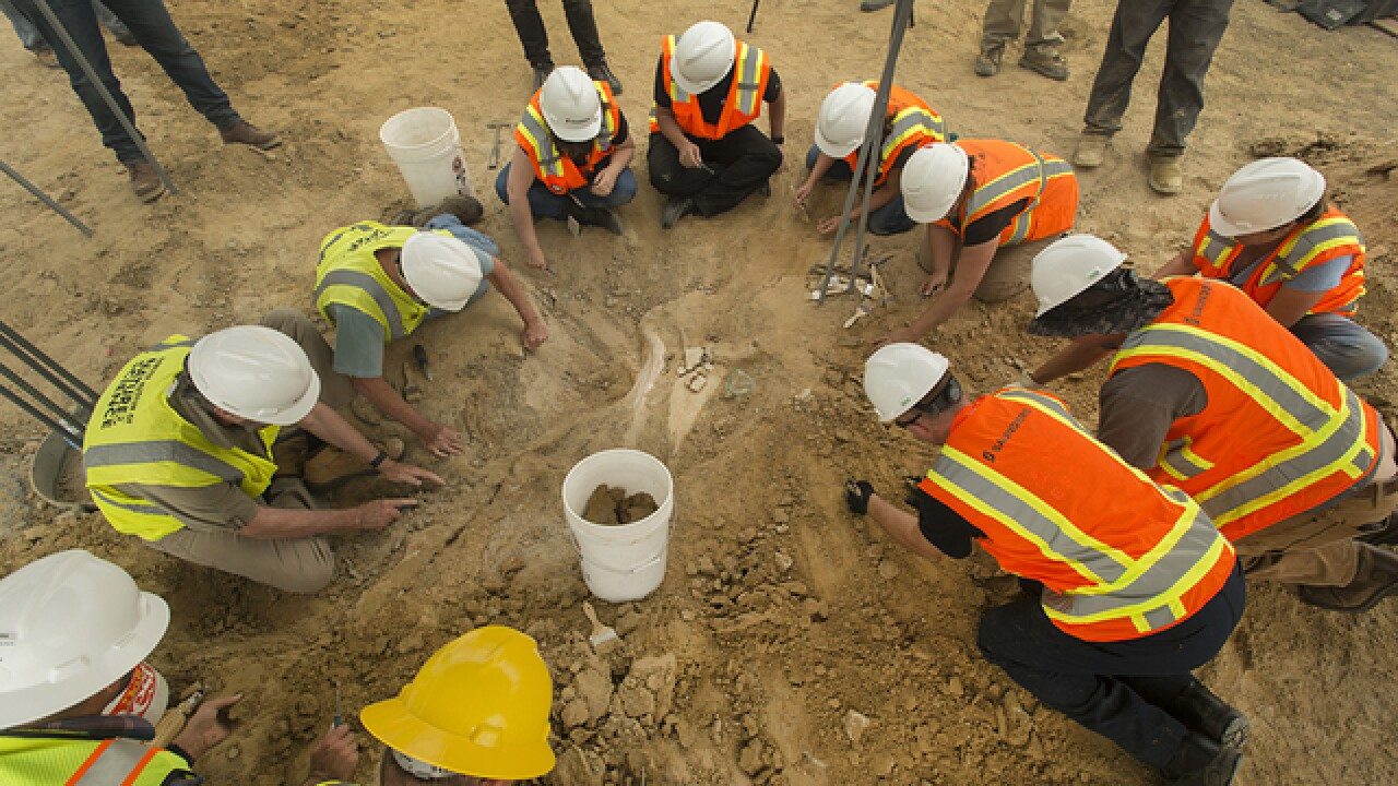 Excavation of triceratops fossil discovered in Thornton complete; largest Cretaceous find in Colo.