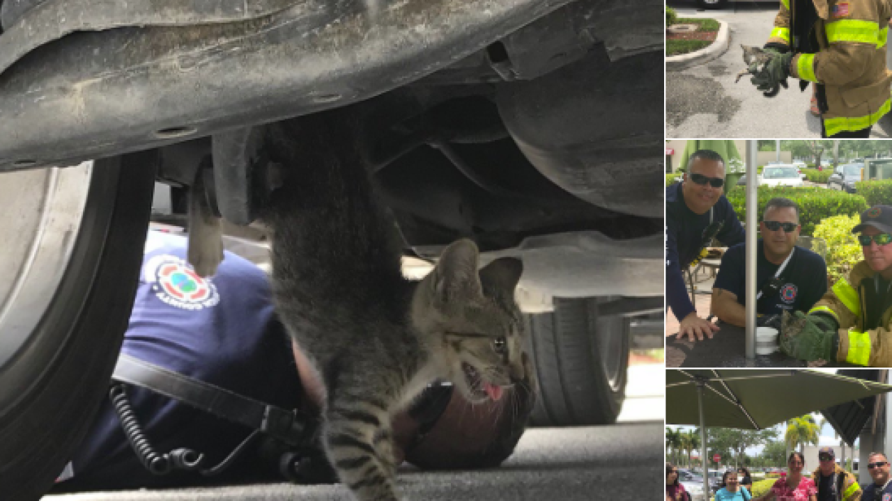 wptv rescued kitten.PNG