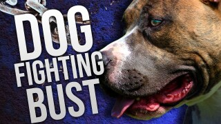 dog fighting bust
