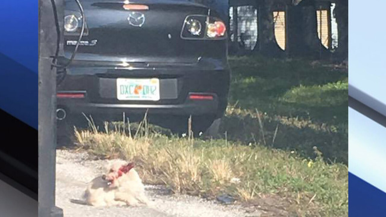 Woman, 70, killed trying to avoid dog on I-275