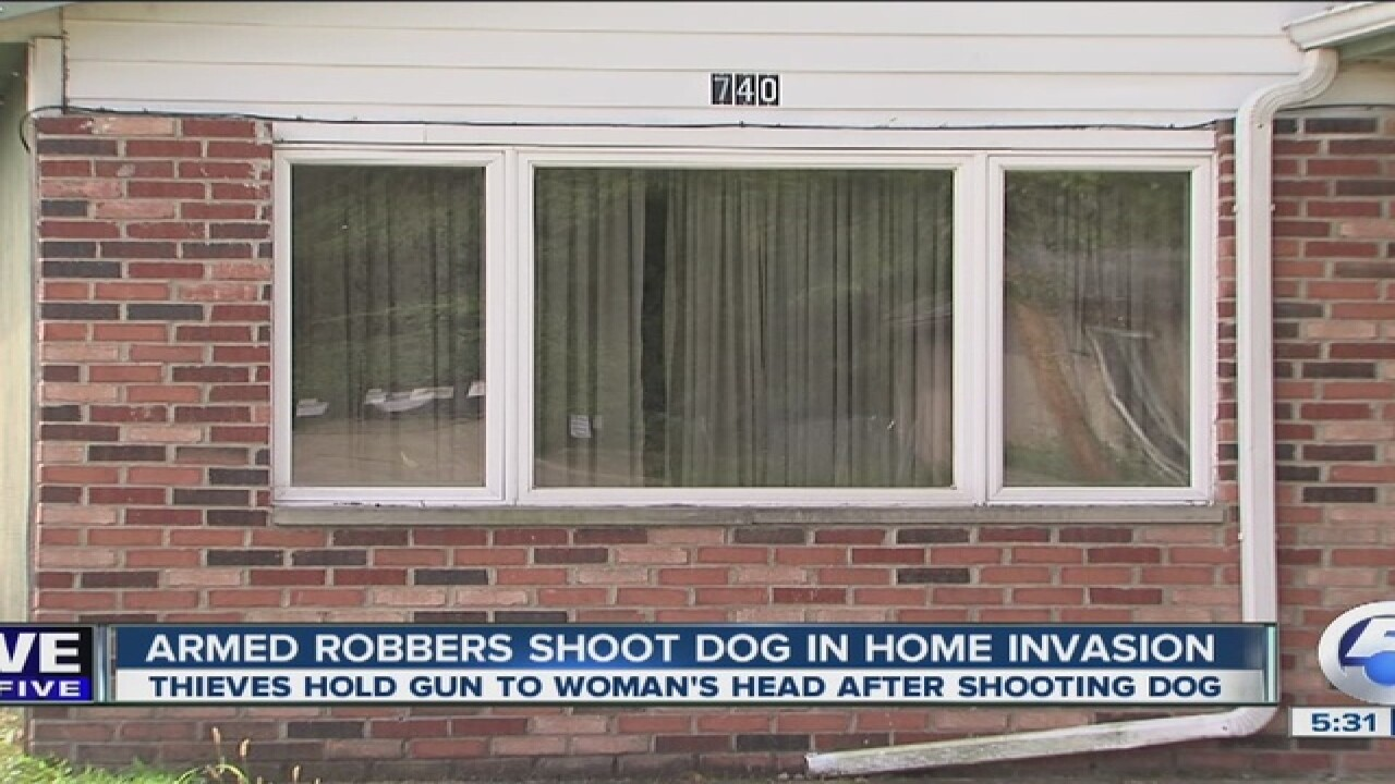 4 robbers hold woman at gunpoint, shoot her dog