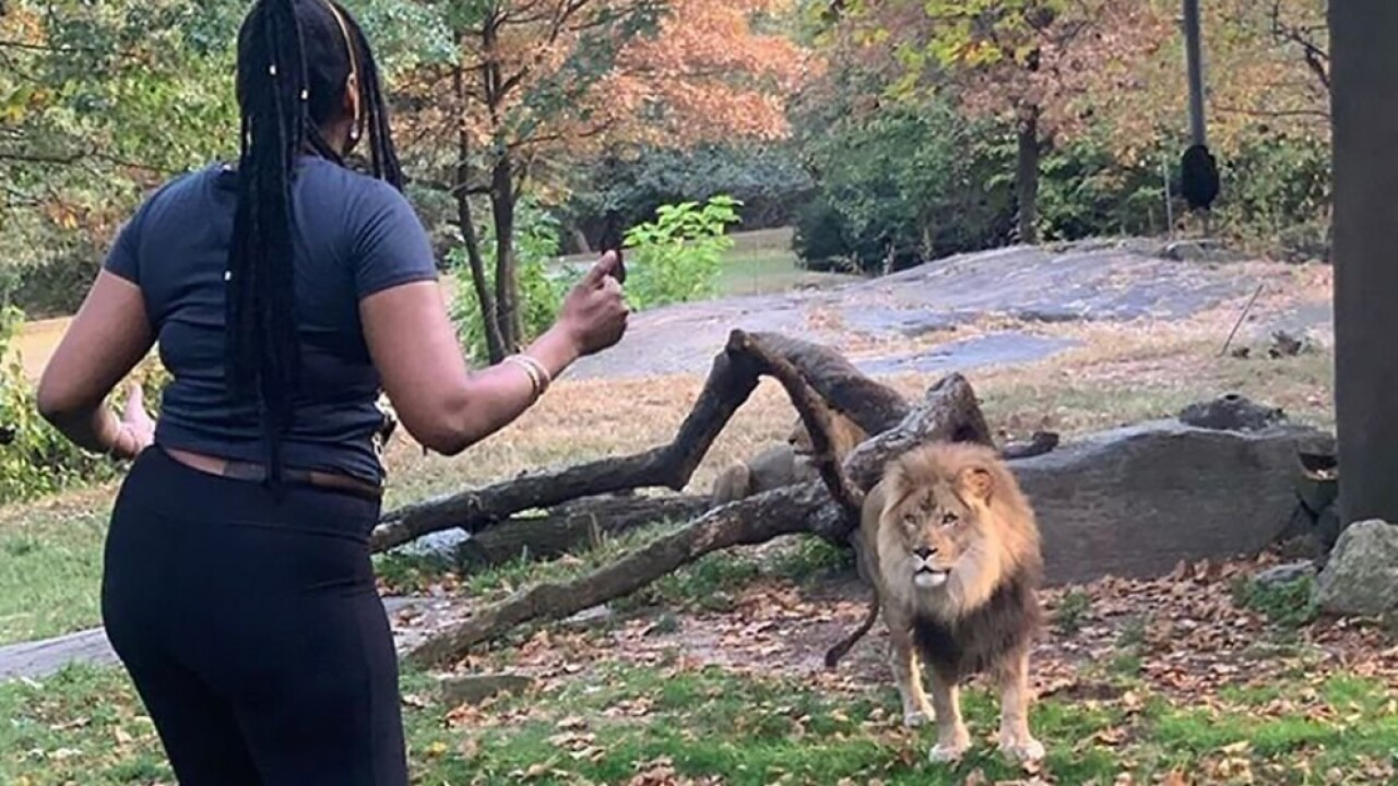 The Bronx Zoo says the woman who trespassed inside its lion enclosure on Saturday put herself in serious danger.