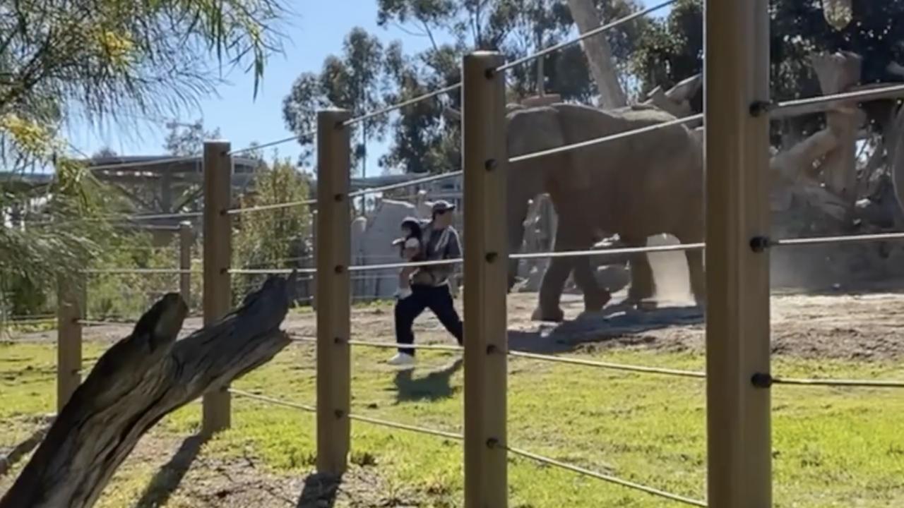 san diego zoo man in elephant exhibit 03192021.png