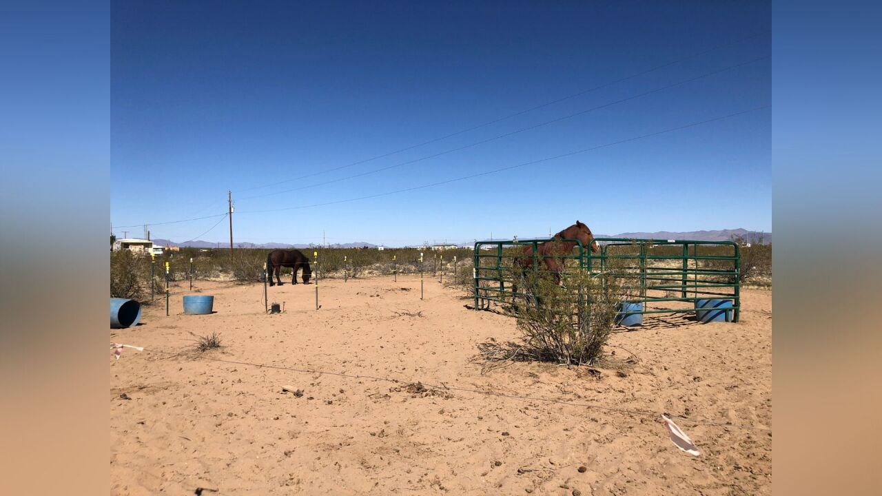 Mohave County horses_5.jpg