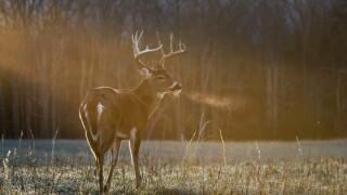Wisconsin's nine-day gun deer season begins Saturday