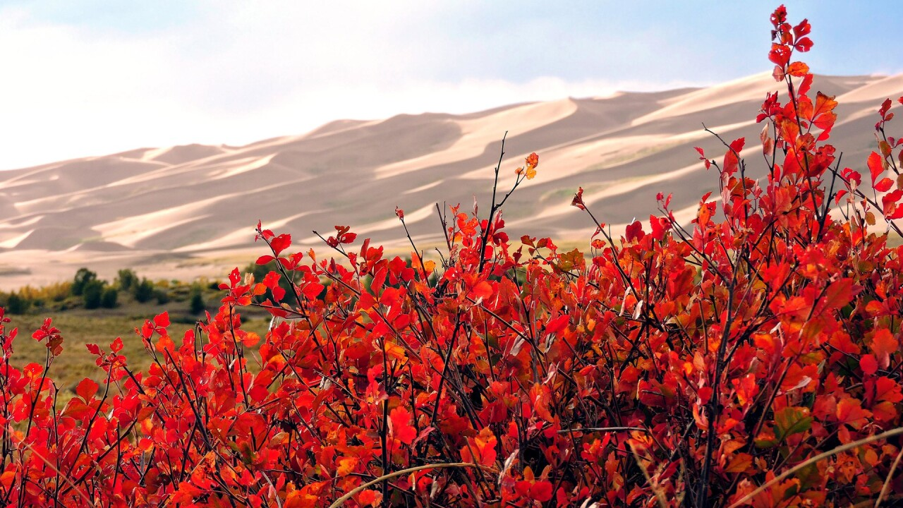 Great Sand Dunes National Park and Preserve in the Fall 10.jpg