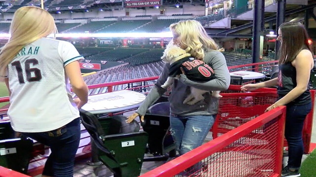 So cool! Tour D-backs' pet patio at Chase Field