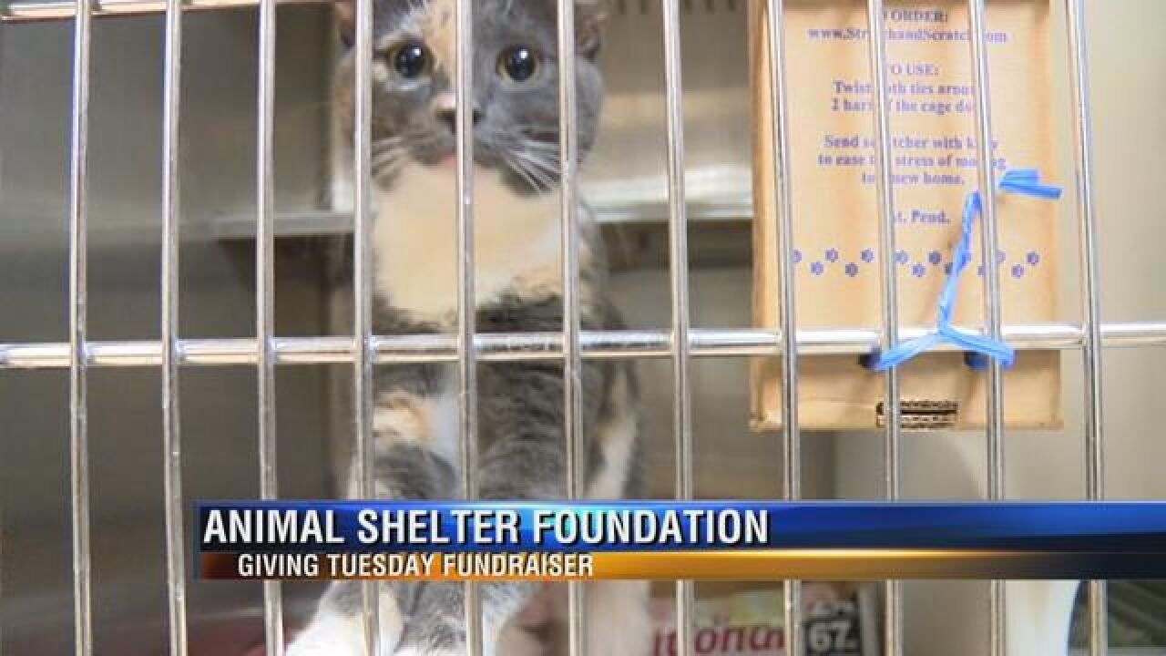 Tallahassee Animal Shelter Accepting Donations to Help Four-Legged Friends