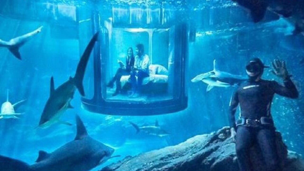 You could have a sleepover in a Paris shark tank
