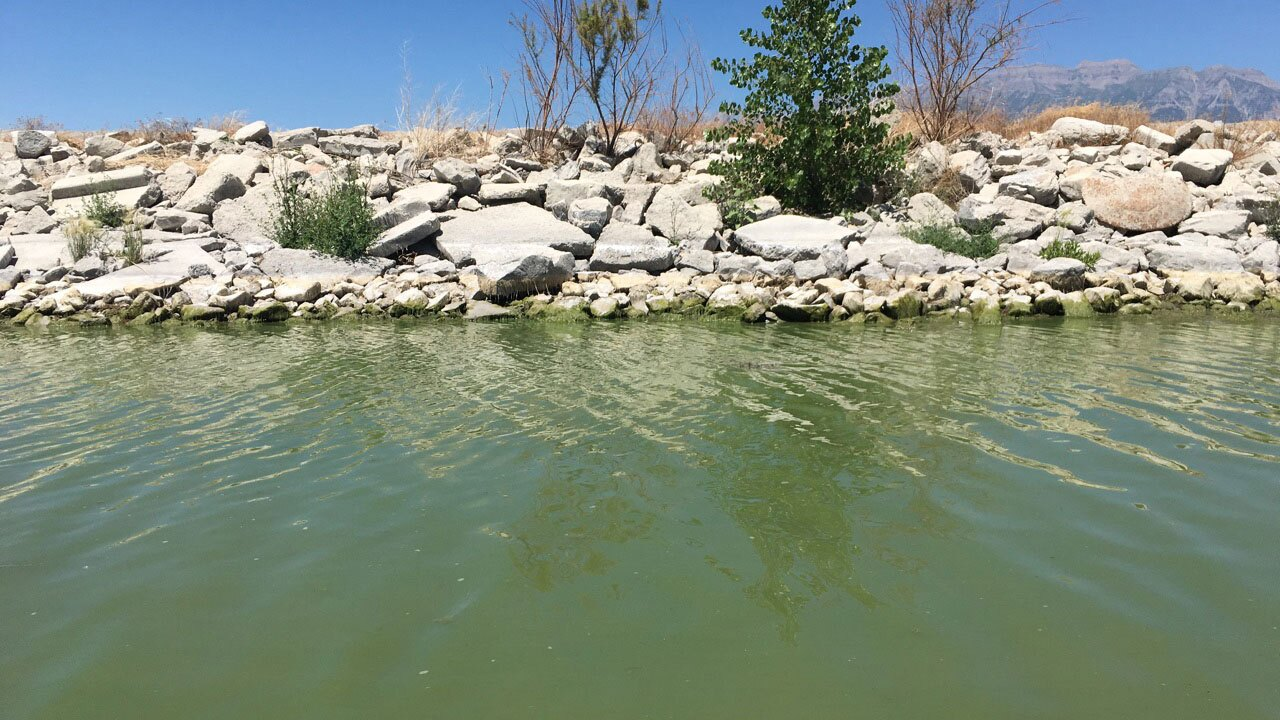 Officials issue warning as toxic algae spreads in Utah Lake