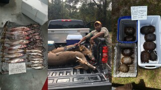FWC busts suspects for illegally harvesting and selling alligators, deer, gopher tortoises, snook