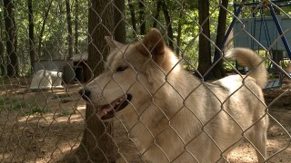 Someone steals pop cans from wolf sanctuary