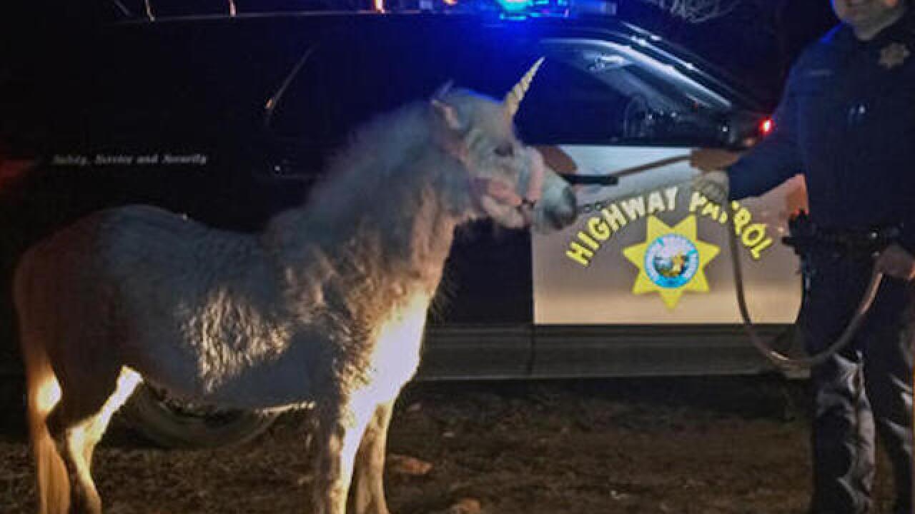 California pony in unicorn getup captured