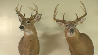 Got a permit? New York DEC reporting record sales for big game hunting and trapping licenses