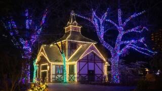 Wild Winter Lights 2020