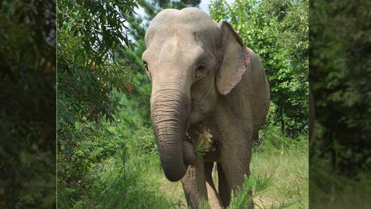 Oldest Elephant At Tennessee Sanctuary Turns 70