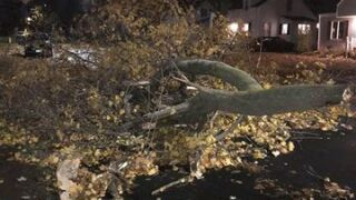 High winds topple trees, cause damage in WNY