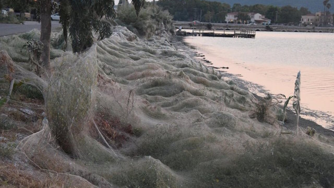This town in Greece is overrun by spiders and they're leaving their webs everywhere