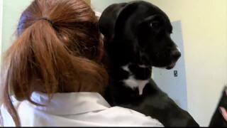 Animal shelter work often physical and mentally demanding
