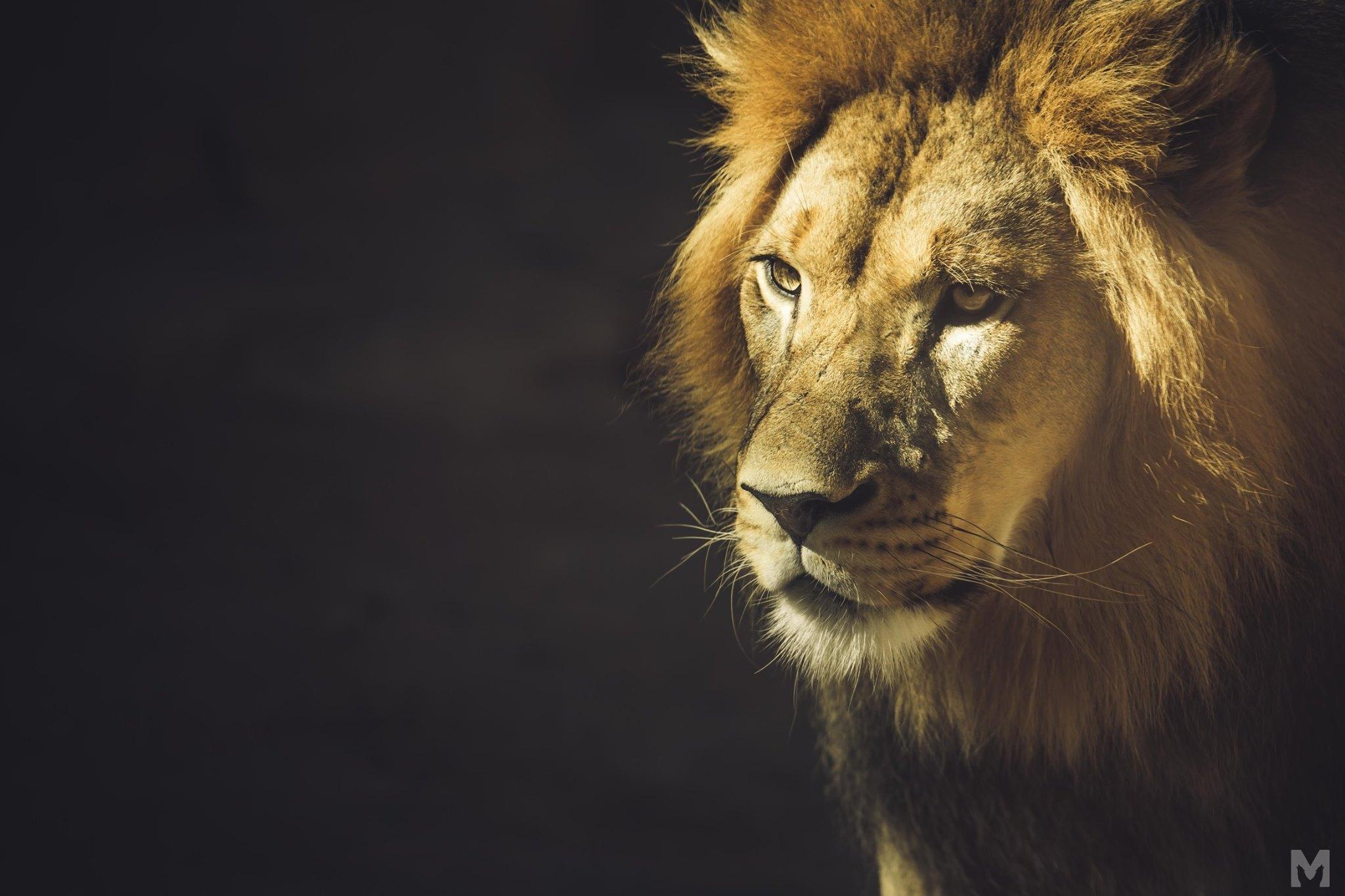 Lion Cub_12_Molly McCormick.jpg