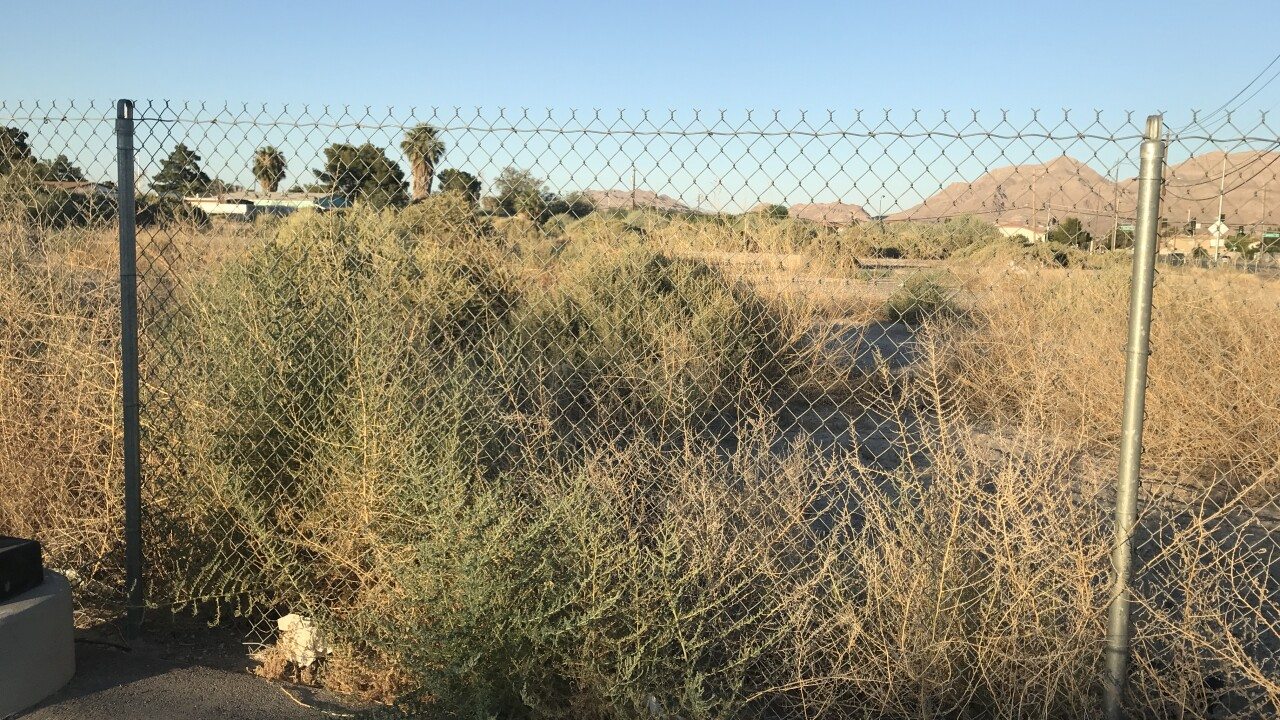 Photos of some creatures that have been spotted around the Las Vegas valley and photos of the Las Vegas wash