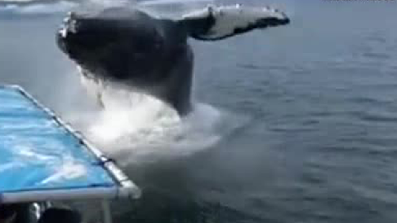 Whale watchers in Alaska get a whale of a surprise (video)
