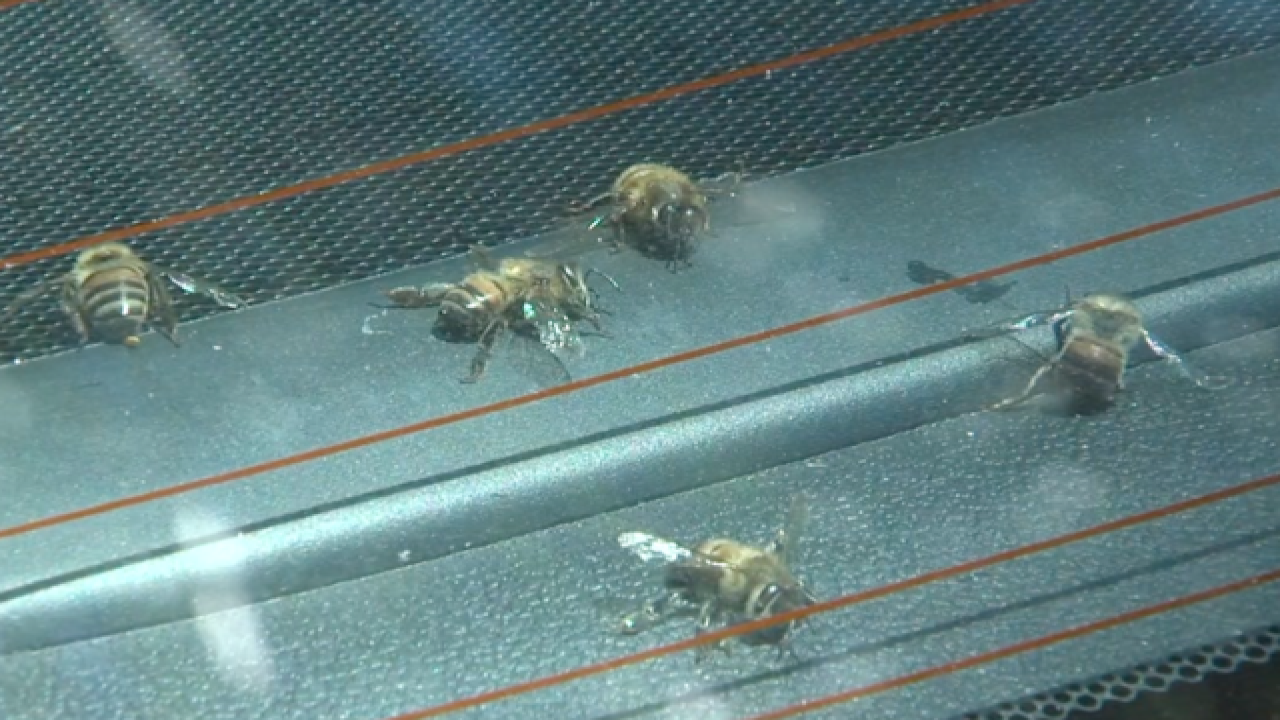 Bee swarm injured 1 person in Rancho Bernardo