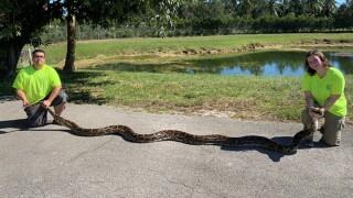 wptv-18-foot-python.jpg