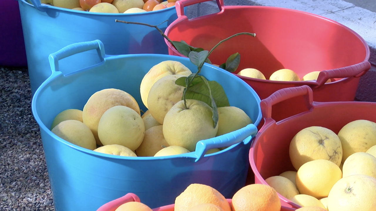 Valley women Christie Kinchen and her sister, offer free citrus
