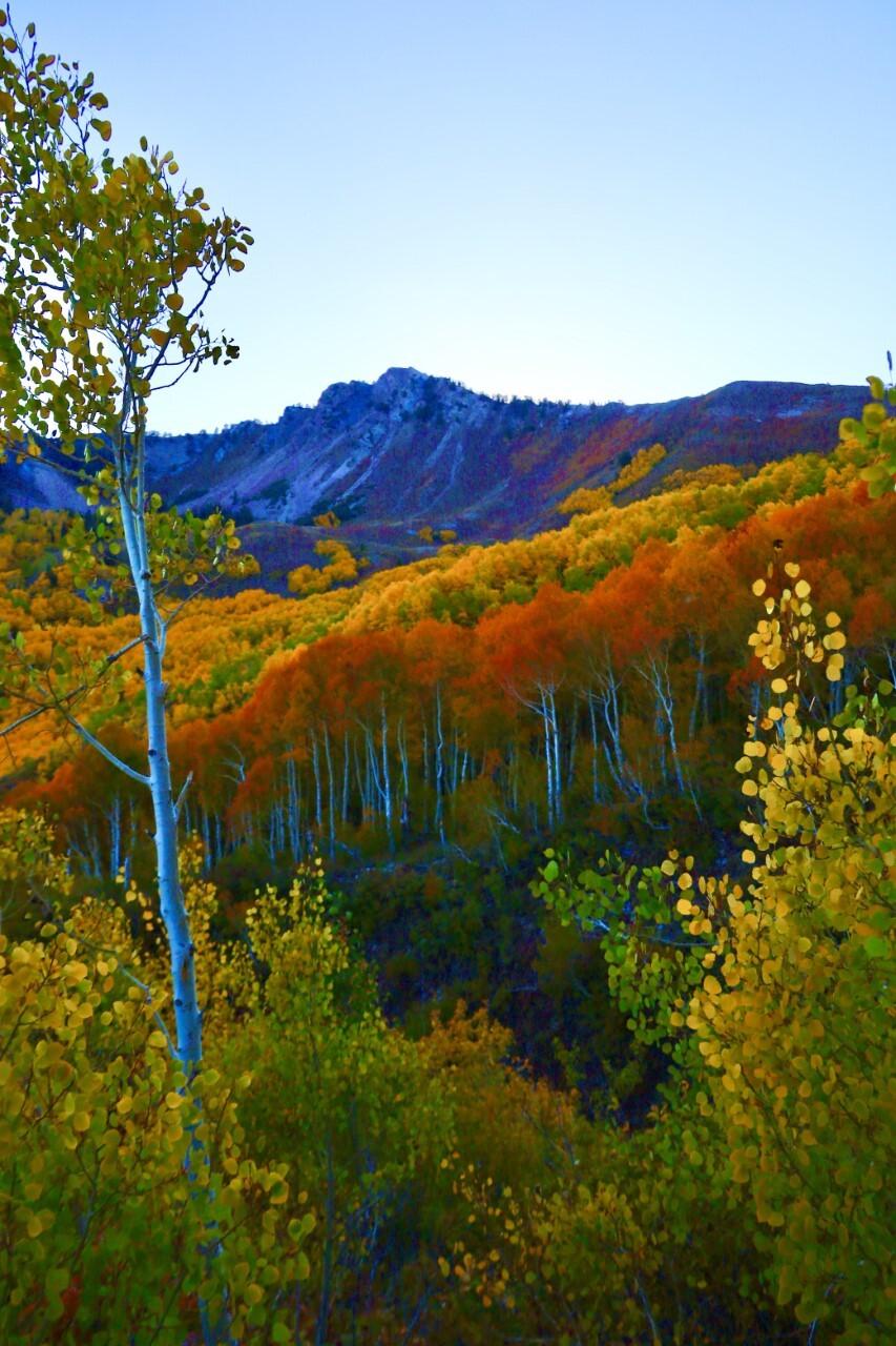 Butler Fork Trail Big Cottonwood Canyon Michael Boman.jpg