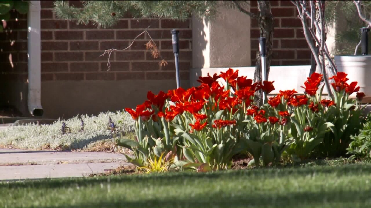 Experts urges Utahns to be smart about sprinkler use as spring arrives
