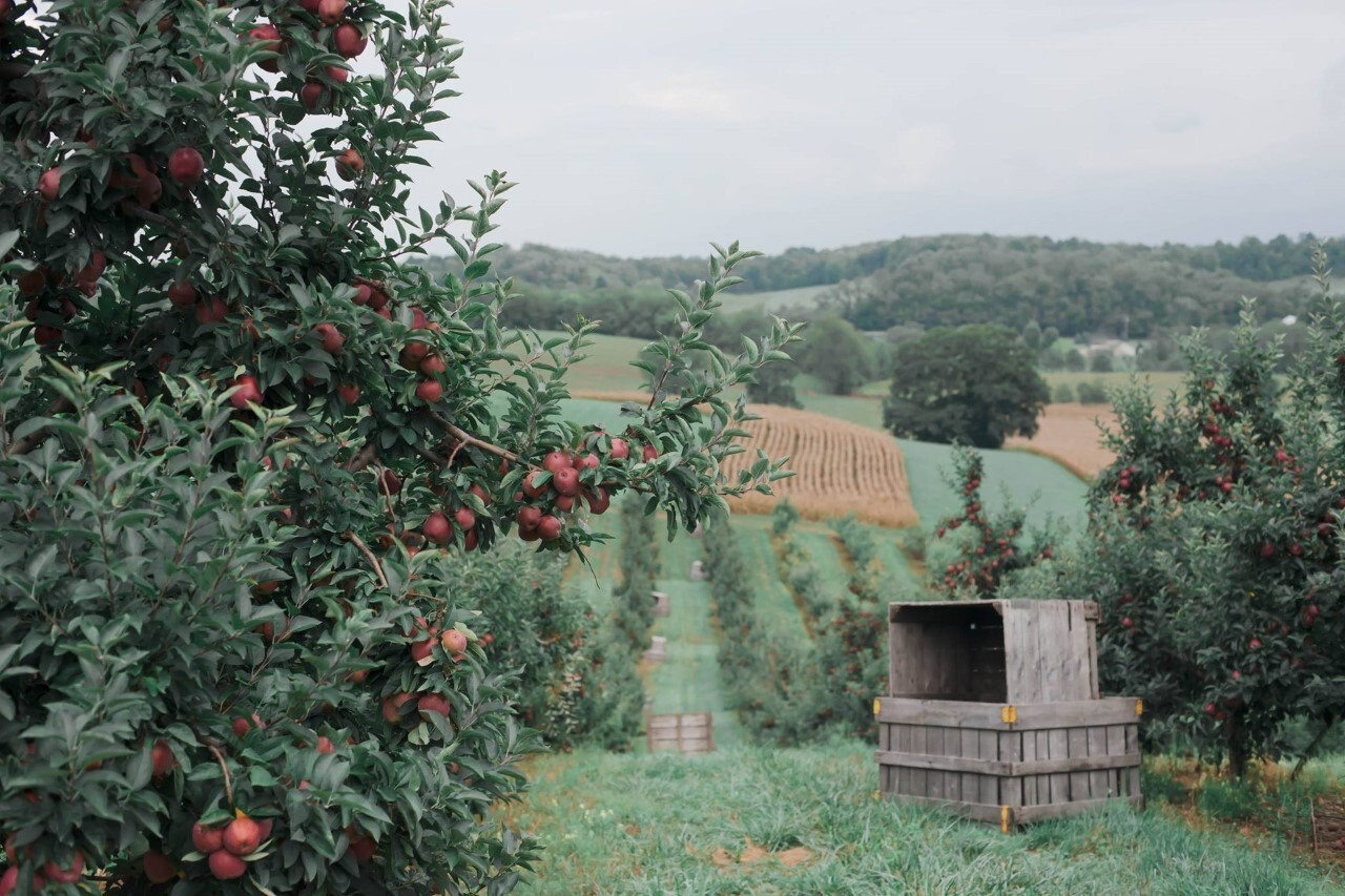 Arrowhead Orchard.jpg