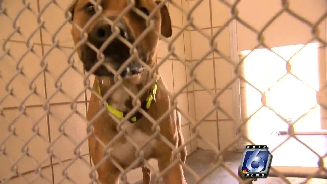 animal cruelty investigators 2 0904