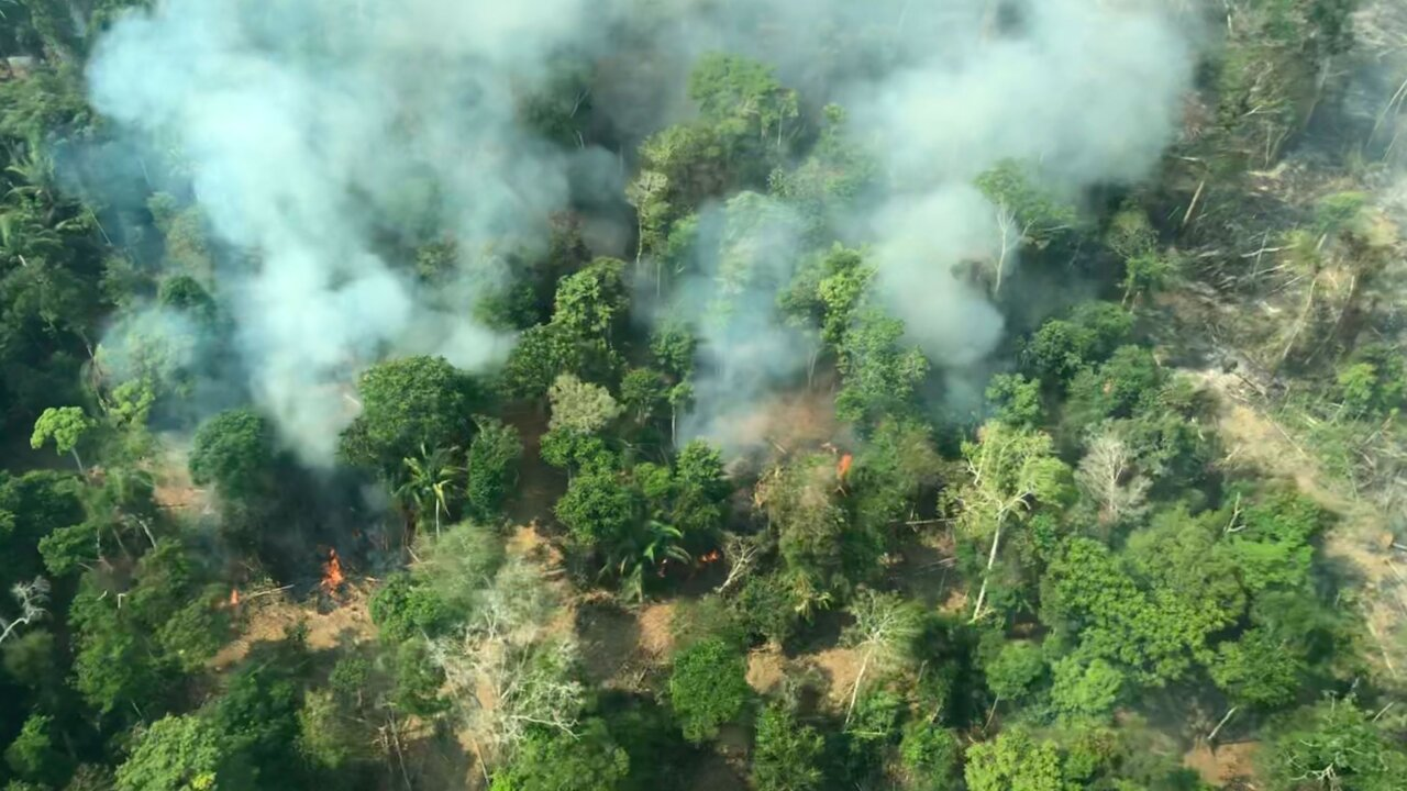 Flying above the Amazon fires, 'all you can see is death'