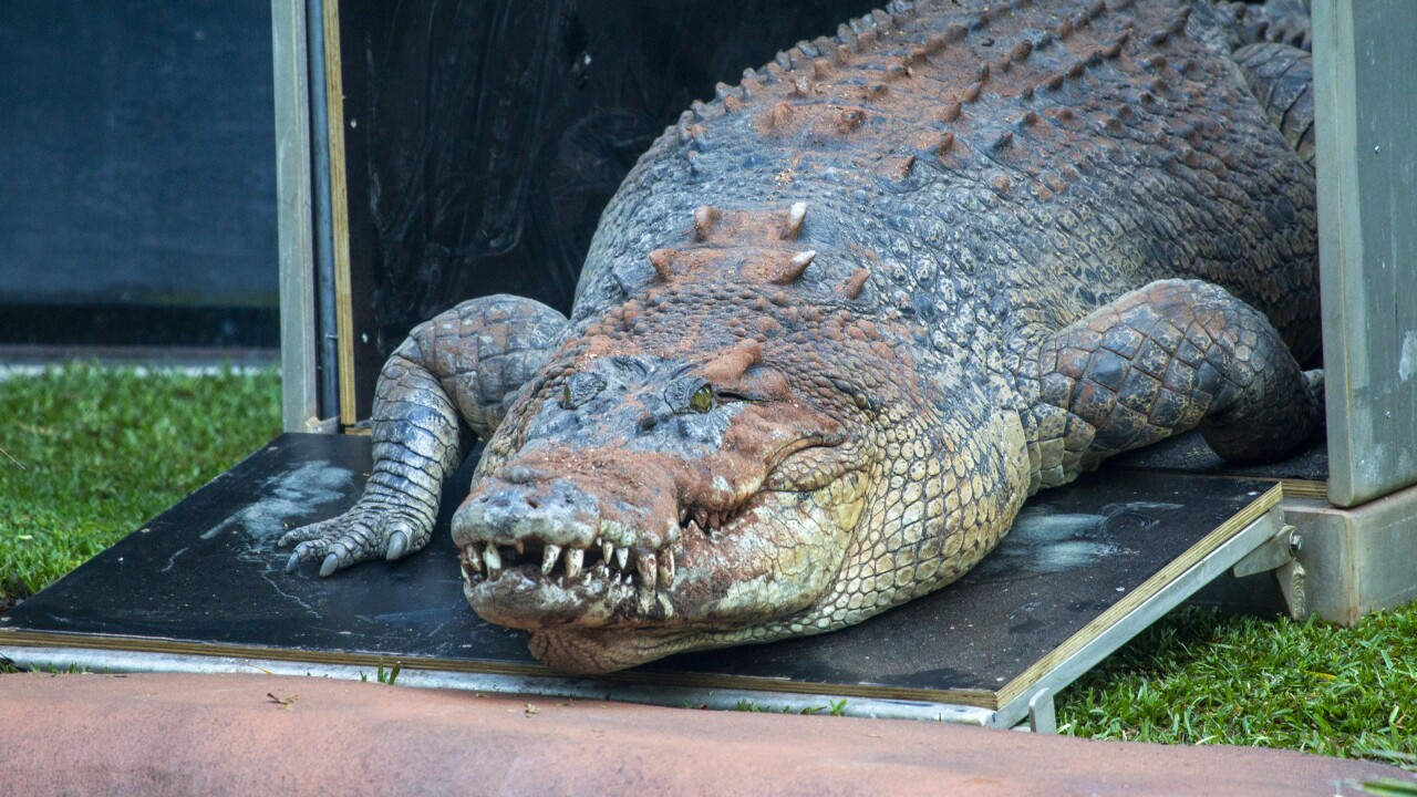 Zoo in Australia now home to a 14-foot crocodile