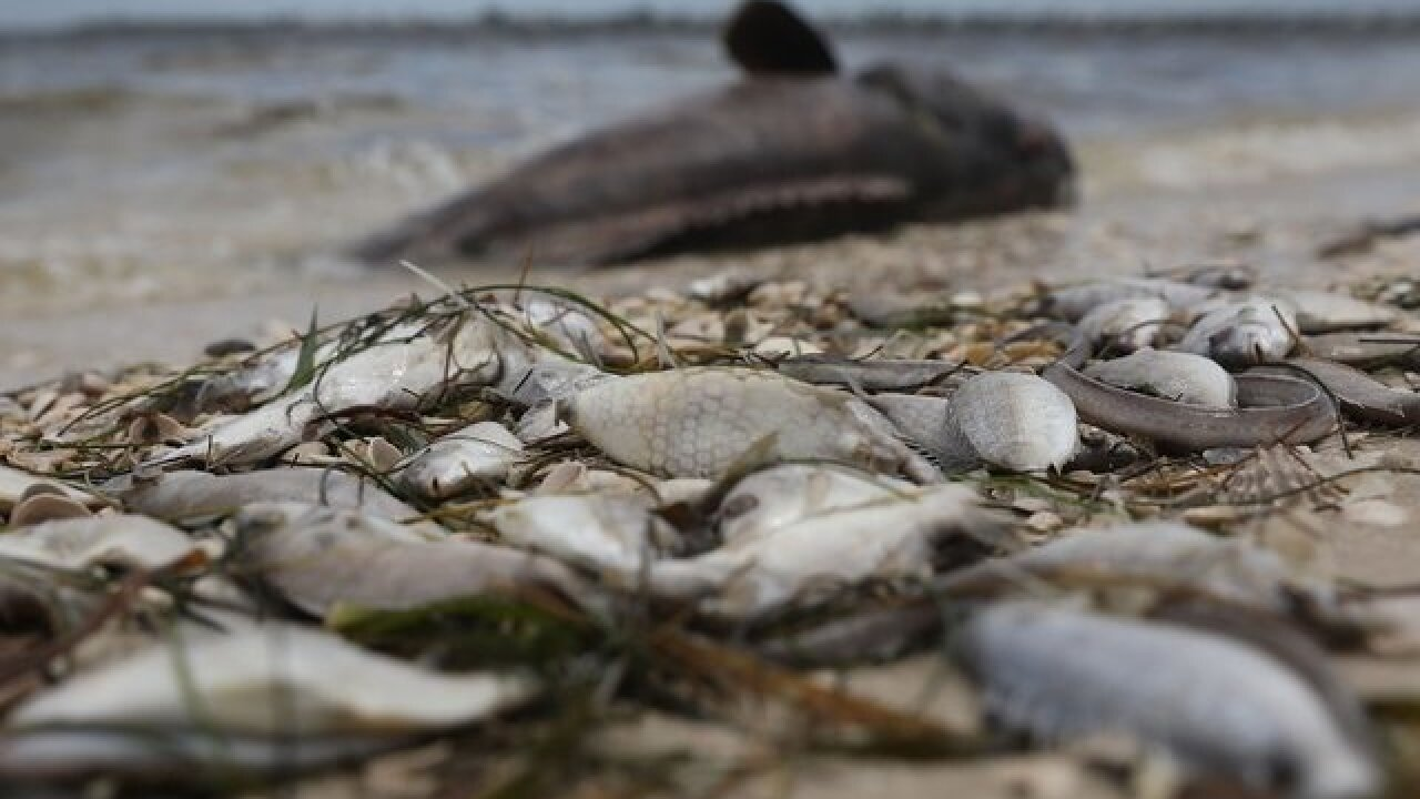 Some FL businesses suffering thanks to red tide