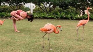 You Can Do Yoga With Flamingos At This Bahamas Resort