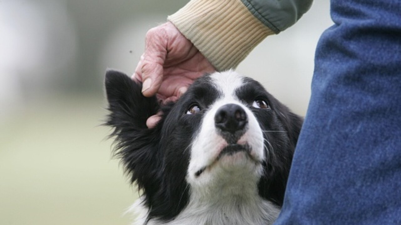 Dying grandfather sees dog one last time in Scotland hospital
