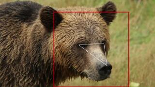Facial recognition is being used to track bears