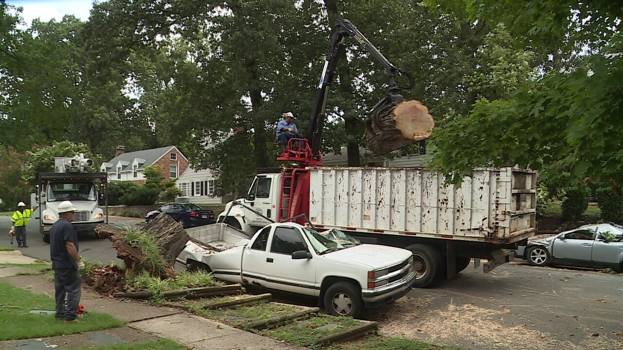 Tree that crushed 2 cars in Richmond was 'already dead,' slated to comedown