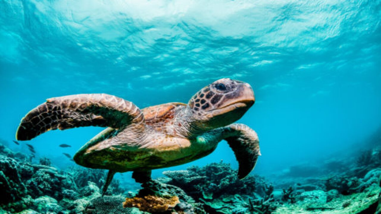 Sea Turtles Are Thriving Now That Humans Are Stuck Inside